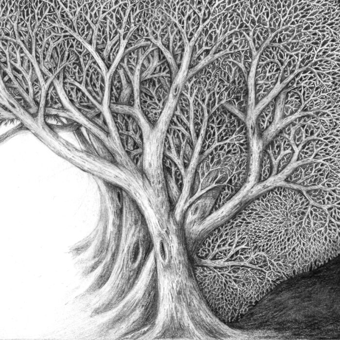 detail of black and white forest passage drawing